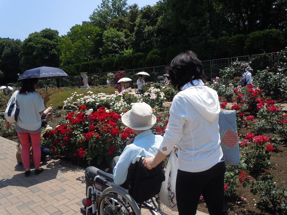 シルバーシティ聖蹟桜ヶ丘の花見