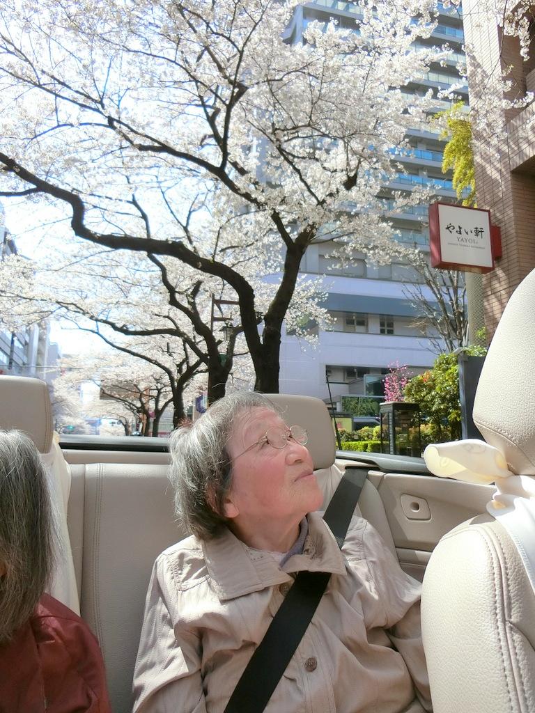 シルバーシティ哲学堂 お花見ドライブ