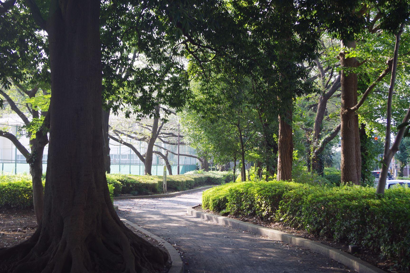 周辺施設:庭球場横の小道