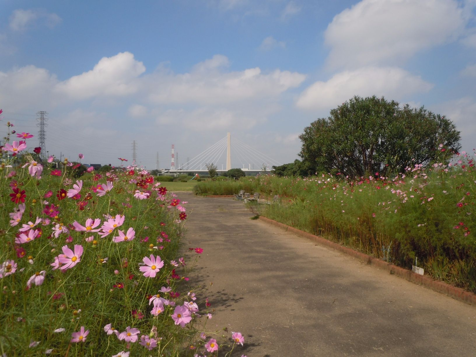周辺施設 一ノ宮公園(多摩川)