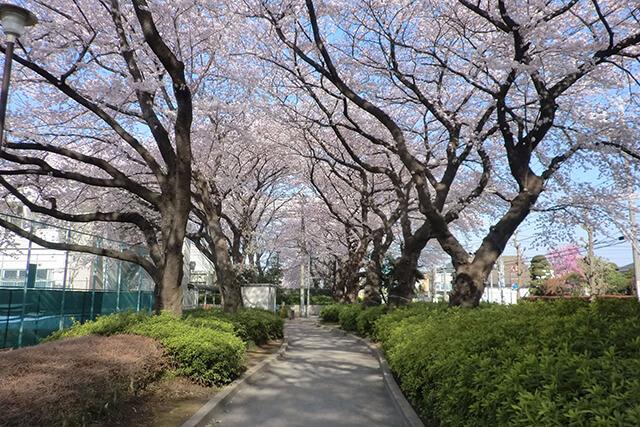 シルバーシティ武蔵野の特徴1